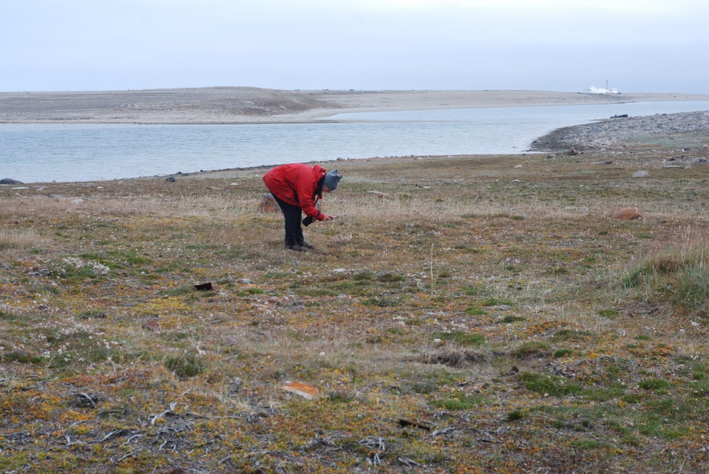 Sally Gray checking the site of the CAE Southern Party headquarters house at Bernard Harbour in 2011